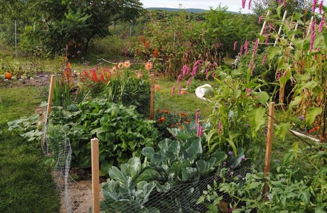 august vegetable garden