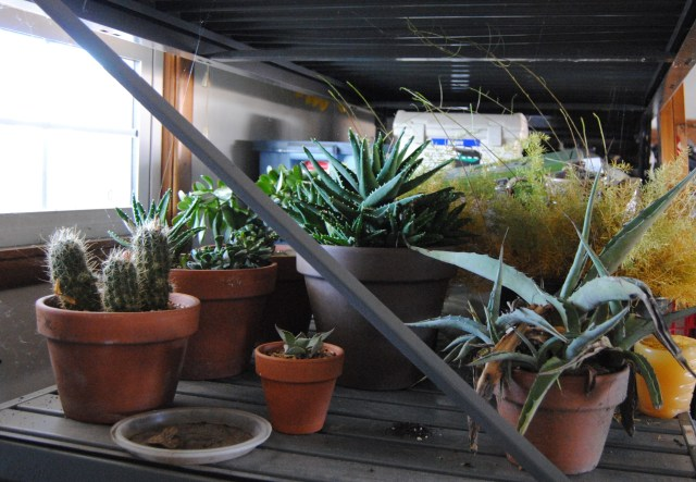 overwinter succulents