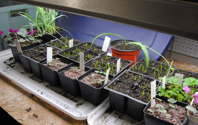 seedlings growlights
