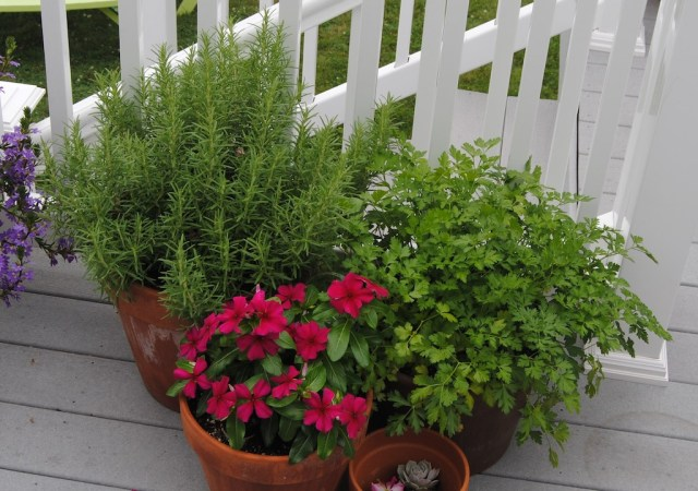 annual container planting