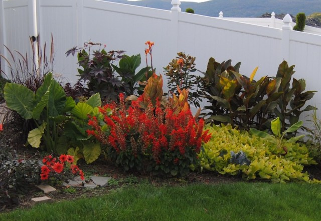 tropicalismo planting