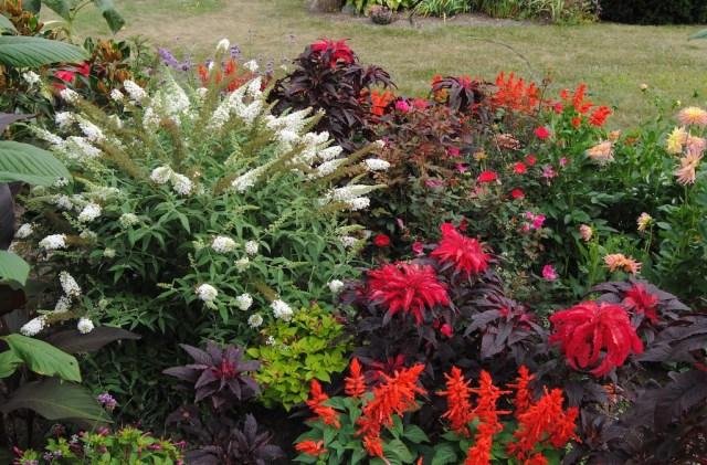 tropicalismo garden