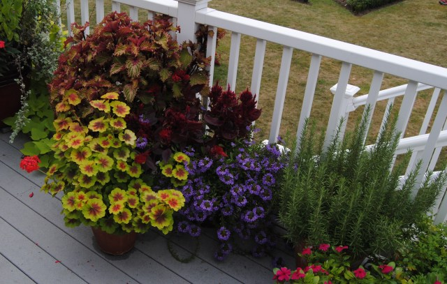 early fall planters on the deck