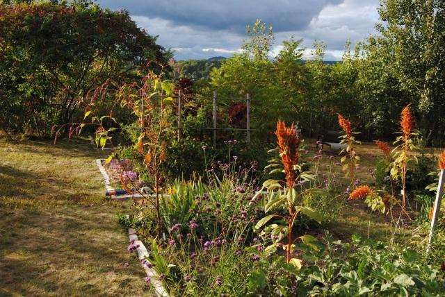the late summer vegetable garden