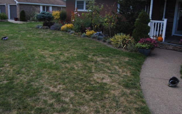 end of summer lawn