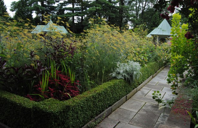 chanticleer boxwood edged flower bed