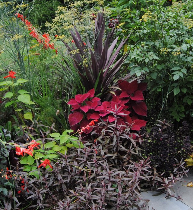 chanticleer red and purple plant combinations