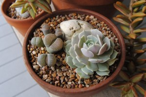 tabletop planting of succulents