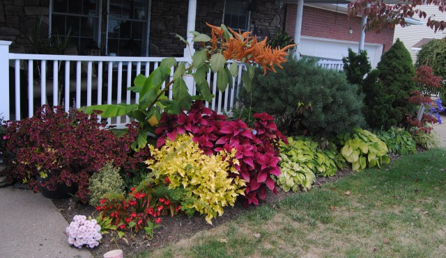 front bed with coleus