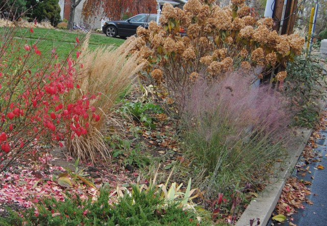 late fall border with grasses