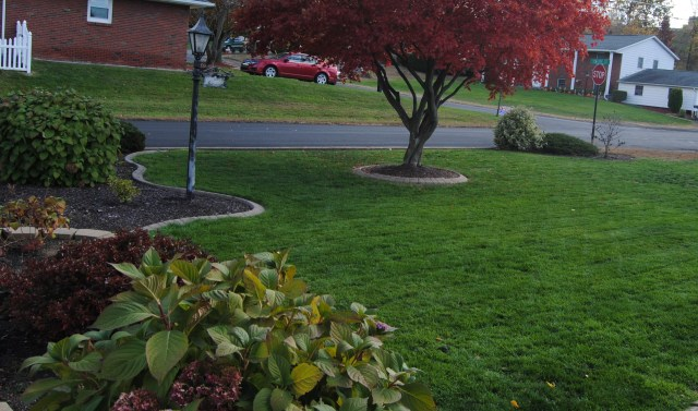 green fall lawn