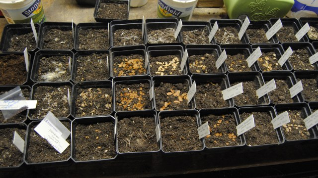 winter sown seeds
