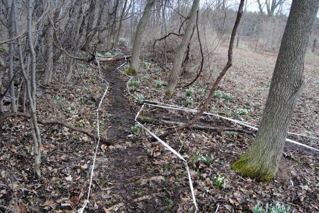 hitch lyman anowdrop garden