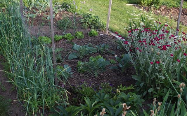 fence for vegetables
