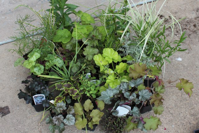 plants from Santa Rosa gardens