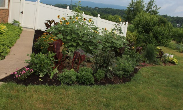 sunflower bed