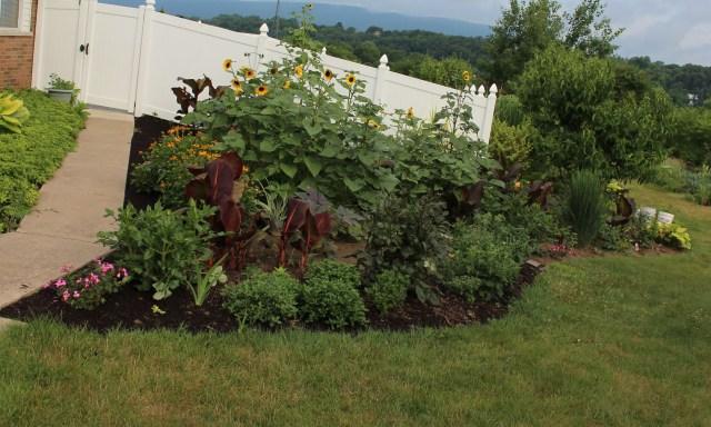 sunflower bed