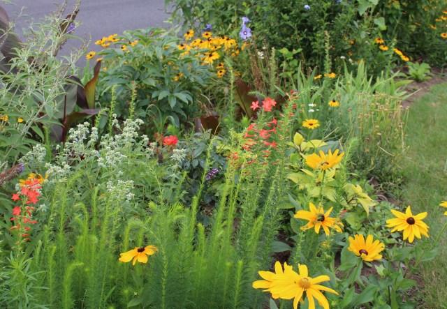 selfseeding annuals