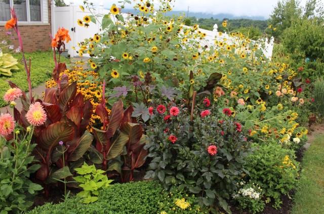 sunflowers, dahlias and cannas