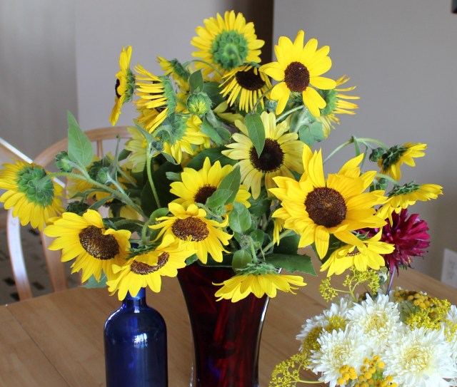 sunflowers from birdseed