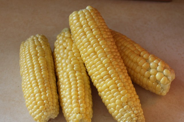 freshly picked sweet corn