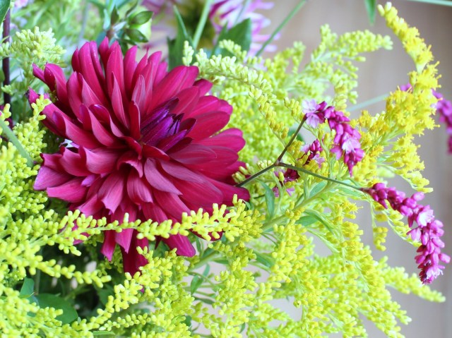 goldenrod and dahlia