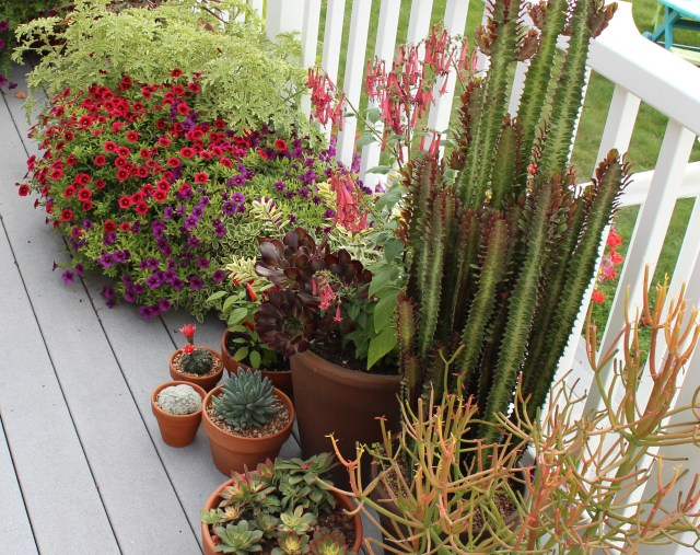container plants for deck