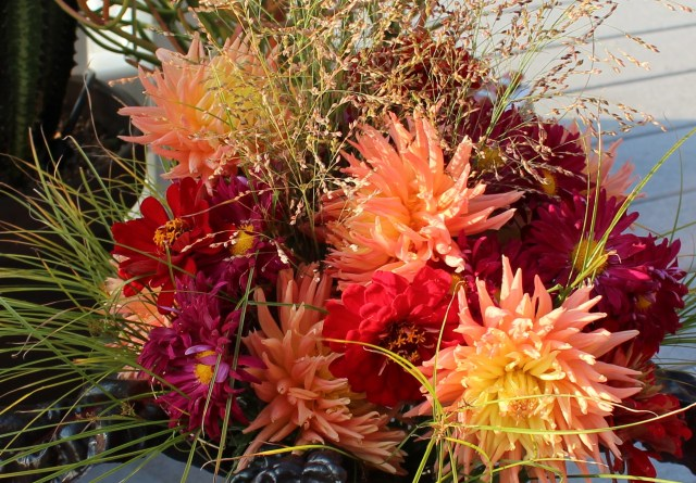 dahlias and zinnias cut flowers fall