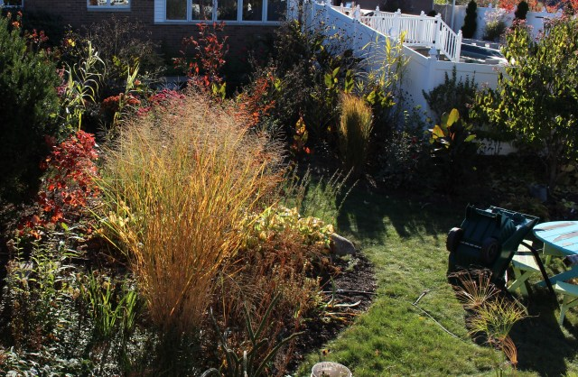 autumn color ornamental grasses