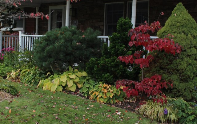 fall color in a mixed border