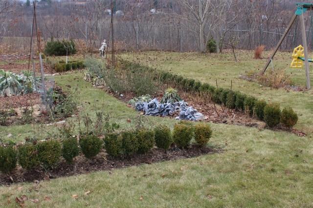 boxwood cuttings hedge around vegetable garden