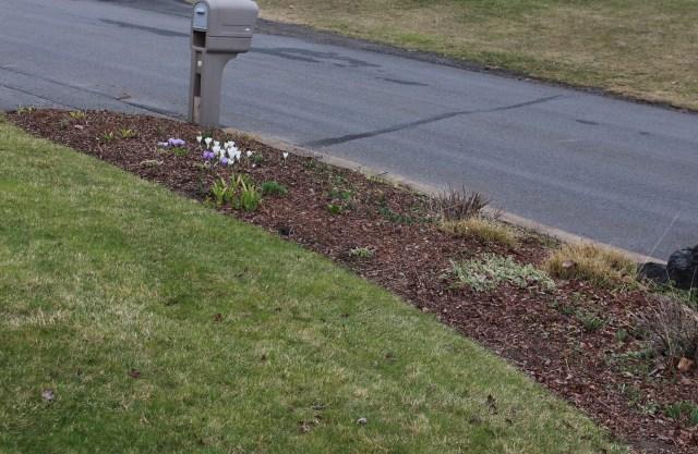 spring garden cleanup mulch