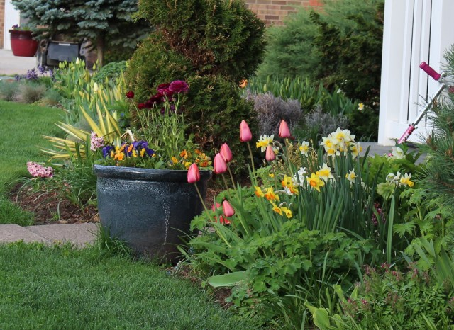 spring bulbs front entry