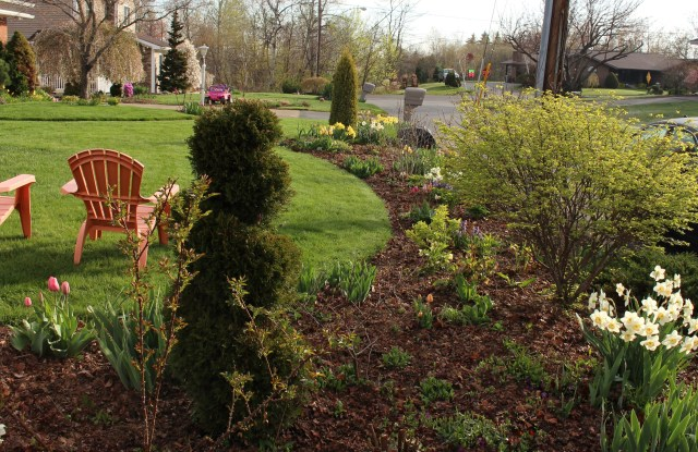 cheap leaf mulched perennial beds