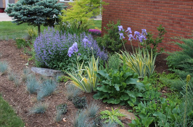 mixed perennial bed as foundation planting