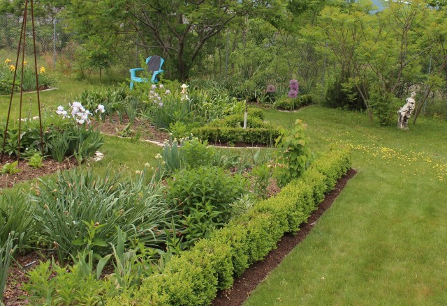 boxwood edging vegetable beds