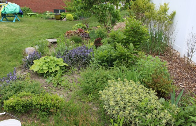 eliminating weeds from perennial bed