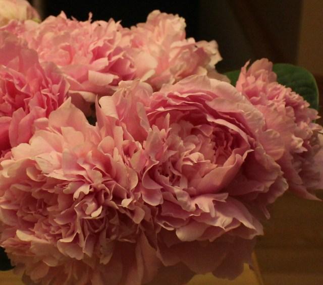 pink double peony