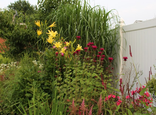 hemerocallis altisima and raspberry wine monarda