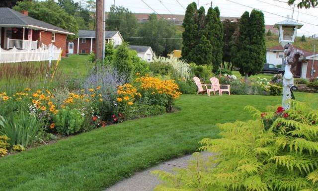 rudbeckia hirta gloriosa daisy perennial bed