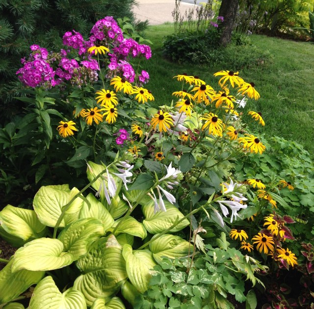 phlox and rudbeckia