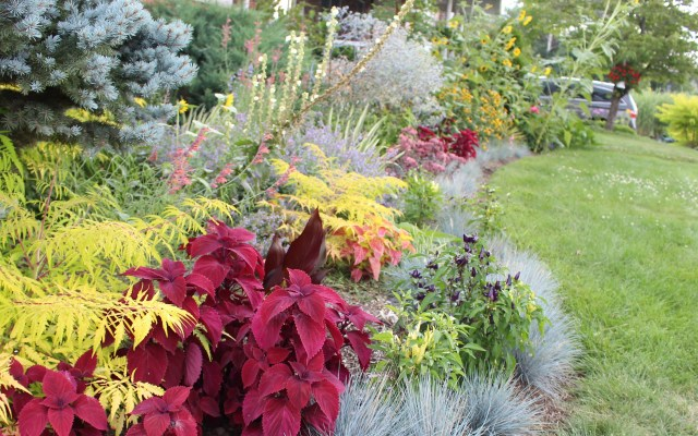 gray and red in a mixed border