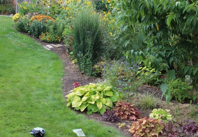 panicum northwind in garden