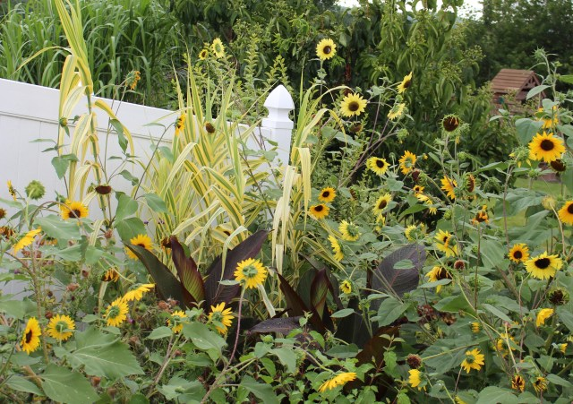 arundo donax gold chain with sunflowers