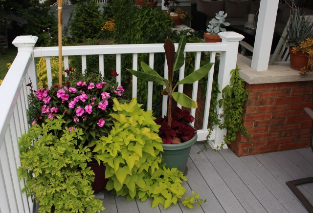 deck container plantings