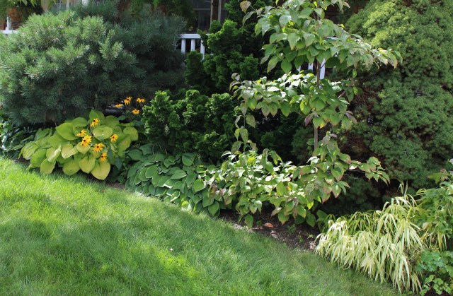 shade foliage border