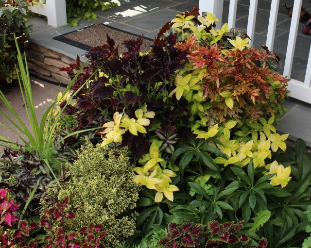 mixed foliage planting