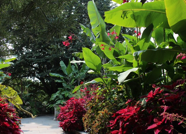 chanticleer red border