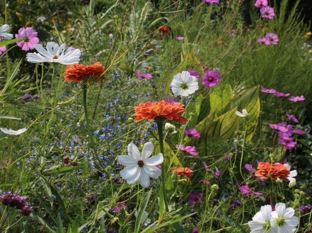chanticleer summer flowers