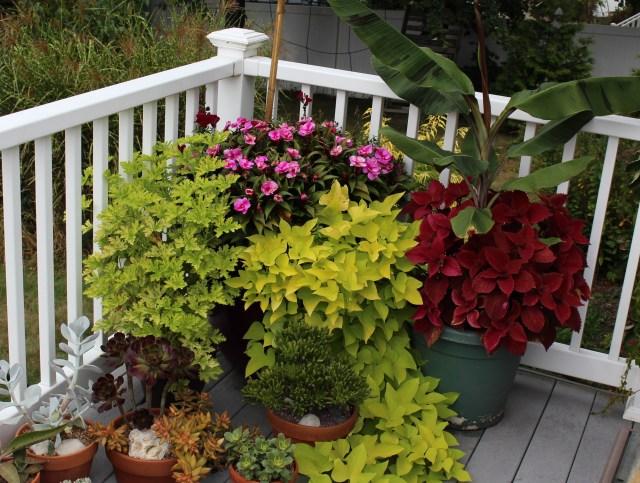 best deck plants